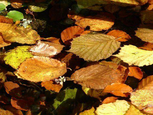 otoño_5