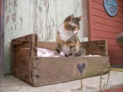 gato en caja de fruta